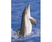 Puzzle Delfín - DĚTSKÉ PUZZLE