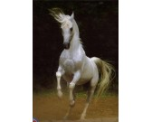 Puzzle Bílý kůň