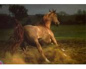Puzzle Hnědý kůň
