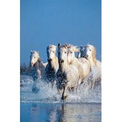 Puzzle Koně ve vodě