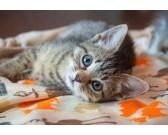 Puzzle Kočička - DĚTSKÉ PUZZLE