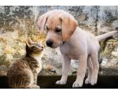 Puzzle Kotě a štěně