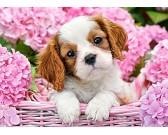 Puzzle Štěňátko v růžovém košíku - DĚTSKÉ PUZZLE