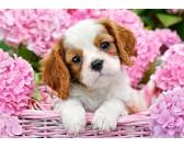 Puzzle Štěně v růžovém košíku