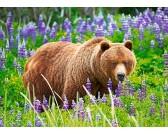 Puzzle Medvěd na louce - DĚTSKÉ PUZZLE