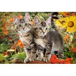 Puzzle Dvě kočičky