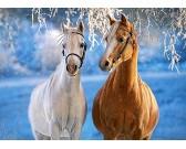 Puzzle Koně v zimě - DĚTSKÉ PUZZLE