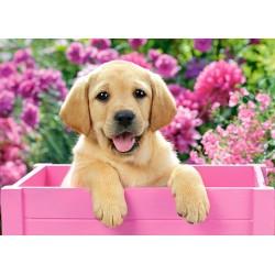 Puzzle Štěně labradora v růžové bedně - DĚTSKÉ PUZZLE