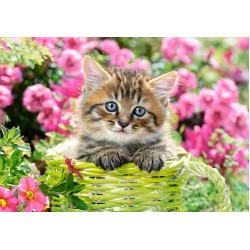 Puzzle Kotě na zahradě