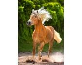 Puzzle Hnědý kůň v běhu