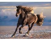 Puzzle Svobodný kůň