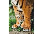 Puzzle Mládě bengálského tygra