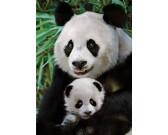 Puzzle Pandí rodinka