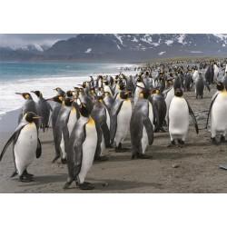 Puzzle Tučňáci