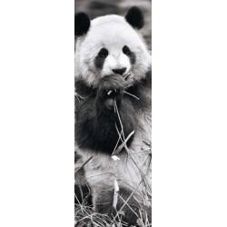 Puzzle Panda v trávě - PANORAMATICKÉ PUZZLE