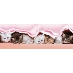Puzzle Koťátka pod dekou - DĚTSKÉ PUZZLE