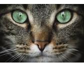Puzzle Zelenooká kočka - DĚTSKÉ PUZZLE