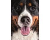 Puzzle Chlupatý pes - DĚTSKÉ PUZZLE