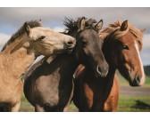 Puzzle Koně - DĚTSKÉ PUZZLE