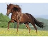 Puzzle Kůň na louce