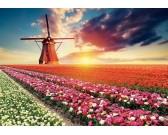 Puzzle Tulipánové pole