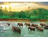 Puzzle Sloni v řece