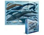 Puzzle Velryby a delfíni
