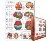 Puzzle Mozek - schéma
