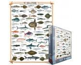 Puzzle Mořské ryby