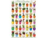 Puzzle Kaktusy a sukulenty