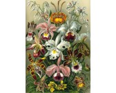 Puzzle Exotická kytice
