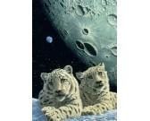 Puzzle Sněžní leopardi