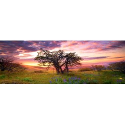 Puzzle Strom Oak - PANORAMATICKÉ PUZZLE