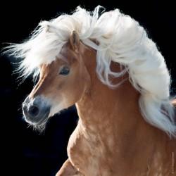Puzzle Kůň - MINI PUZZLE