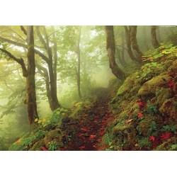 Puzzle Lesní cesta