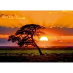 Puzzle Strom v západu slunce