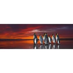 Puzzle Království tučňáků - PANORAMATICKÉ PUZZLE