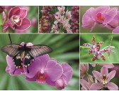 Puzzle Orchideje