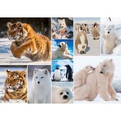 Puzzle Arktická zvířata