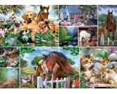 Puzzle Zvířecí svět