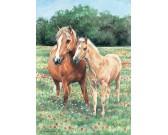 Puzzle Koně na rozkvetlé louce