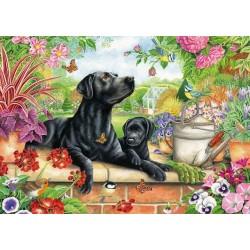 Puzzle Černí labradoři v zahradě