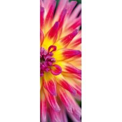 Puzzle Zářivá kaktusová jiřina - VERTIKÁLNÍ PUZZLE