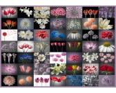 Puzzle Pozdrav květin