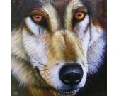 Puzzle Tvář vlka