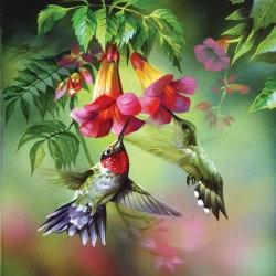 Puzzle Kolibříci