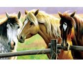 Puzzle Tři koně