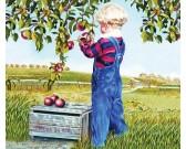 Puzzle Sklizeň jablek