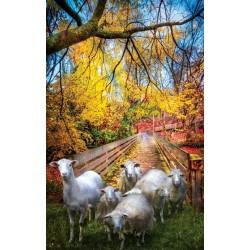 Puzzle Stádo ovcí