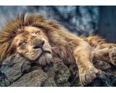 Puzzle Spící lev